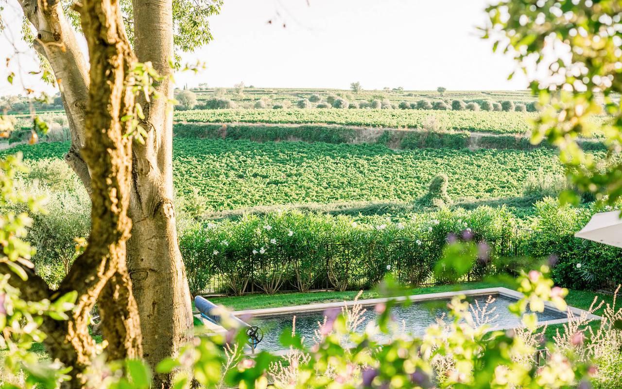 View of the vineyards, Languedoc wine tours, Château St Pierre de Serjac.